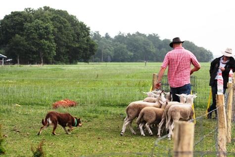 """Deze foto werd getrokken op de clinic 2015 waar we les kregen van David Hart en Sean Barrett (2 Australiërs die hier in Europa enkele weken  les kwamen geven i.v.m. schapendrijven met working kelpies. David Hart is trouwens ook de fokker van onze import reu """"Tracker Hero""""."""